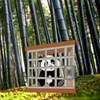 Wow escape the tiny panda