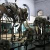 Wow Museum Escape